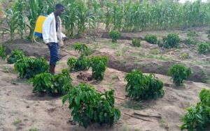 Agriculture Project Update